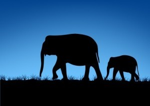 impacto elefante